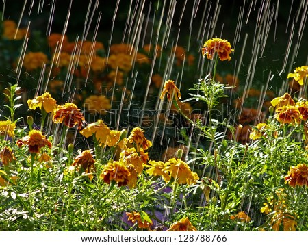 Rain falls on the flowers in the garden - stock photo