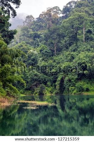 Rain-forest