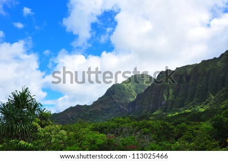 Rain forest against cloudy bright blue sky