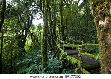 Rain forest at Doi inthanon (Chiang Mai Province Thailand)