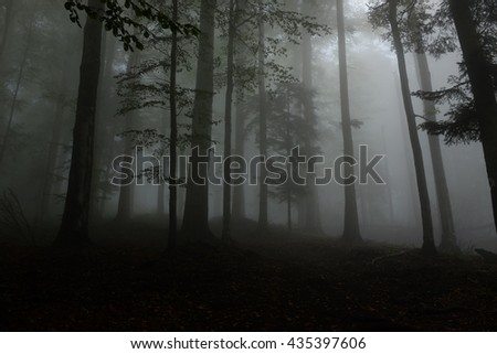 Rain forest/ fog forest/ trees #435397606