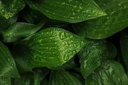 rain forest green macro nature photography leave with morning dew water drop ecology concept wallpaper background picture