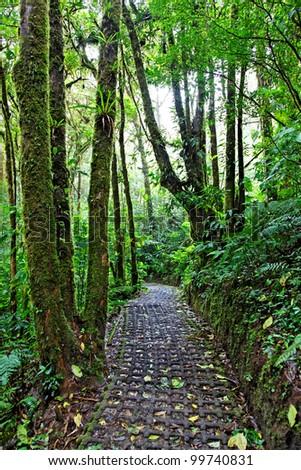 Rain forest in Monteverde, Costa Rica, Central America