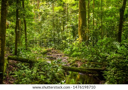 Rain forest scene from the deep jungle of Panama #1476198710