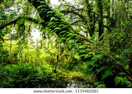 Rain forest with trees.