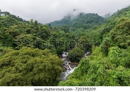 Rain Forests at Thusharagiri, Kerala , India