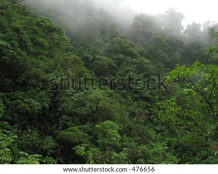 Rain forrest in Costa Rica