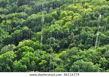 Rain in tropical forest, amazon ecosystem, nature.