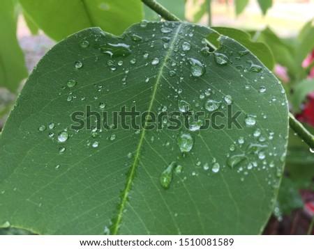 Rain leaf green plant dew drop dew #1510081589