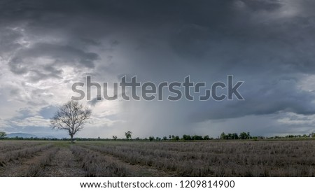 Rain storm sky, view of dark clouds moving above alone tree in the rice fields with heavy raining background, rural in Banpong District, Ratchaburi, Thailand.