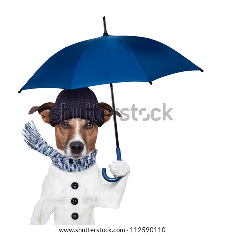 rain umbrella winter dog