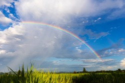 Rainbow above the rice fields that are growing during the rainy season which the fresh blue sky in Southeast Asia.
