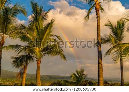 Rainbow and palm trees