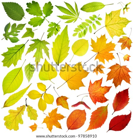 Rainbow collection of tree leaves isolated on white background