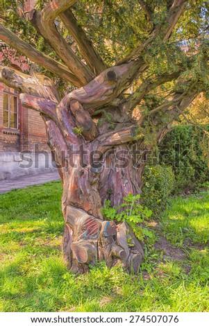 Rainbow Eucalyptus ?ree trunk. The tree loses its bark.  Selective focus on tree trunk.