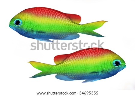 Rainbow Fish Clipart Rainbow Fish Clipart Rainbow