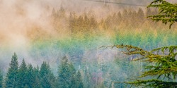 Rainbow in the forests of Olympic National Park