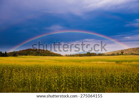 rainbow over a golden field of...