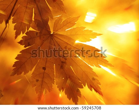 Rainbow rays, yellow maple leaf