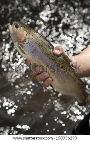 Rainbow Trout grow in flow-through system,northern,Thailand no.1