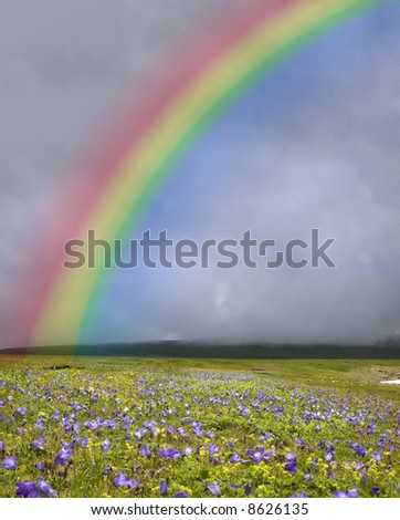 rainbow under the field