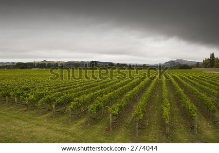 Rainclouds roll over a vineyard in Hawke's Bay, New Zealand