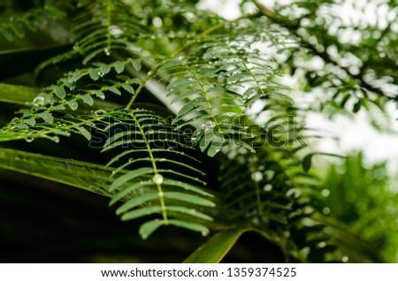Raindops glisten on bright green fern leaves in Bermuda
