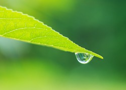 Raindrop on the tip of a green leaf with internal reflection on blurred green background. Natural calming background with copy space.