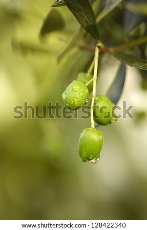 Raindrops on olives