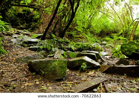 Rainforest - stock photo
