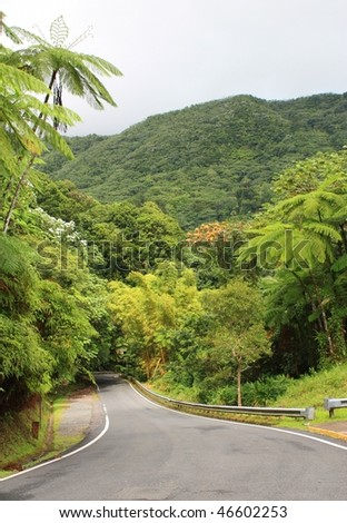 Rainforest and road