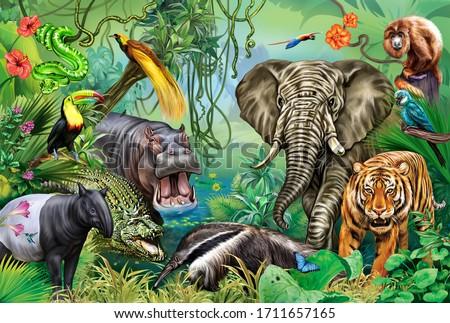 rainforest animals: elephant, tiger, tapir, howler monkey, parrots, hummingbird, boa, anteater, hippopotamus, bird of paradise, crocodile, toucan, large color poster, illustration for encyclopedia