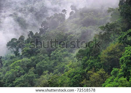 rainforest canopy at the Barron Gorge, Cairns, Queensland, Australia