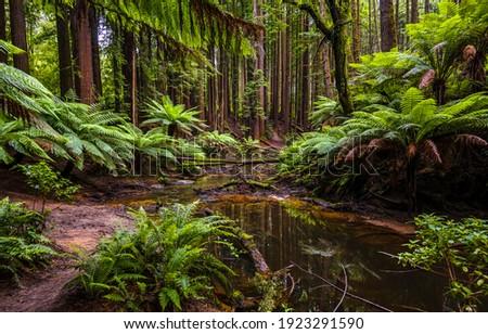 Rainforest creek water. Rainforest water trail. In rainforest. Rainforest trail view