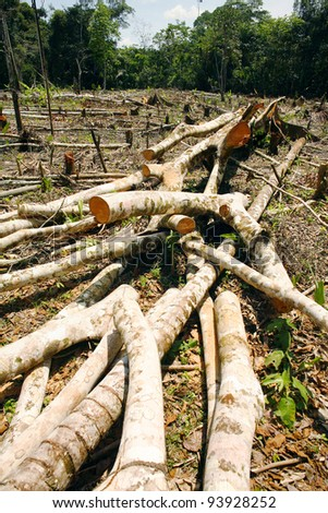 Rainforest deforestation in Peru. Trees cut for slash and burn cultivation
