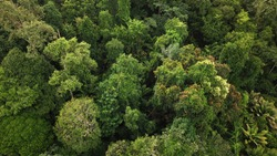 rainforest drone aerial view from above