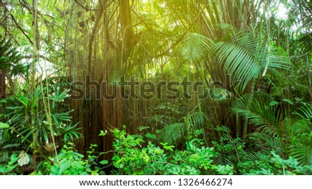 Rainforest in Southeast Asia, Thailand. Sun glare. Lush jungle. Exotic leaves. #1326466274