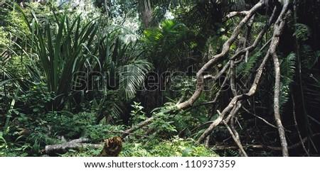 Rainforest in Tanzania, Africa