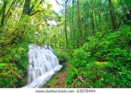 Rainforest  Intanon National Park, Chiangmai province, North of Thailand