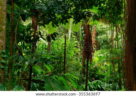 rainforest near Cairns, North Queensland, Australia #355363697
