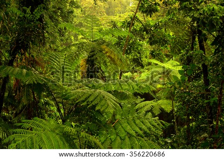 rainforest near Cairns, North Queensland, Australia #356220686