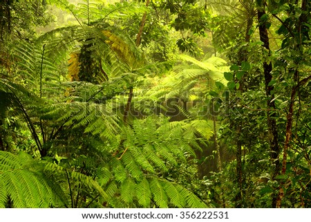 rainforest near Cairns, North Queensland, Australia #356222531