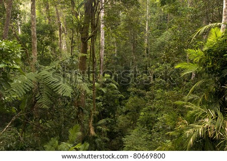 rainforest near Cairns, Queensland, Australia