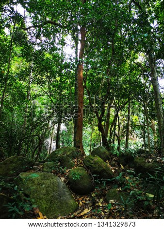 Rainforest or tropical rainforest classified as non-deciduous forest Is a forest that is green throughout the year Trees will not shed leaves during the dry season. Due to the large amount of rainfall