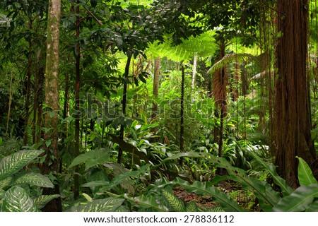 rainforest  queensland ...