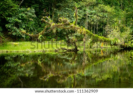 Rainforest river with foliage and tree