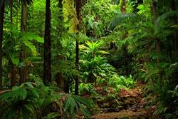 rainforest view, Queensland, Australia