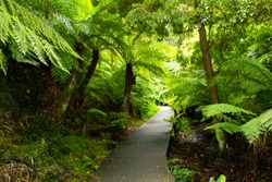Rainforest walk at Australian National Botanic Gardens