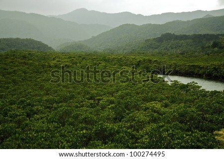 Rainforest with river in the tropics. An untouched wilderness.