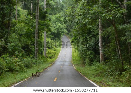 Rainforests or tropical rainforests Often called the rainforest #1558277711